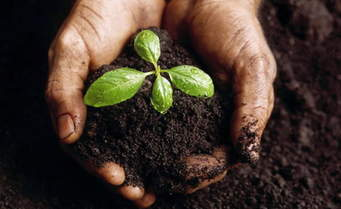 biochar-soil